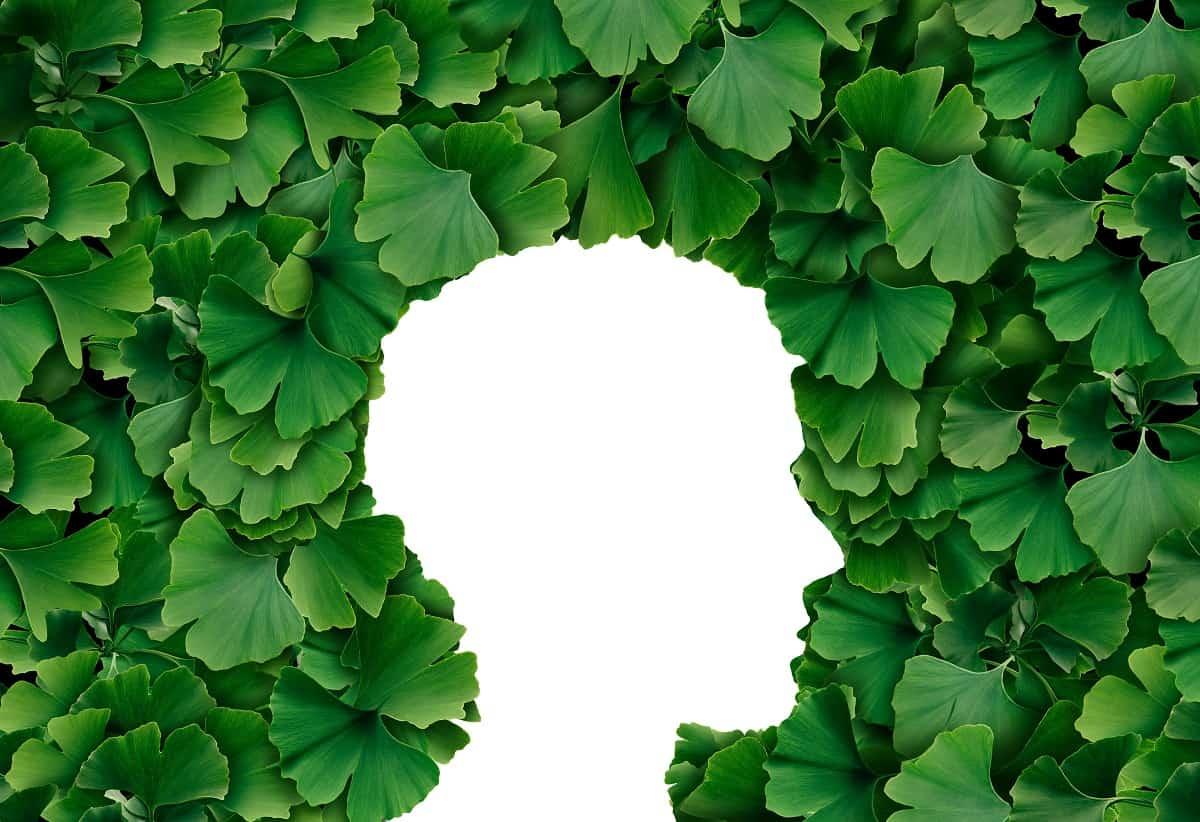 Best Herbs for Memory - ssimplebrainhacks.com